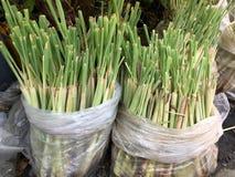 Green lemongrass tree Royalty Free Stock Photo