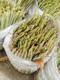 Green lemongrass tree on plastic bag Stock Images