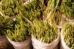 Green lemongrass tree on plastic bag Stock Photos