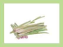 Green lemongrass watercolor  illustrations vector Royalty Free Stock Images
