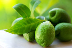 Green lemons group. Stock Photos