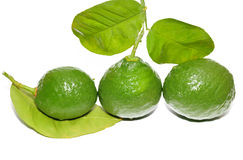 Green lemons with leafs. Green limes and leaves isolated on white stock photography