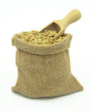 Green lentil in linen sack on white backround. Stock Images