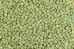 Green lentils. Macro view of green lentils Stock Photography