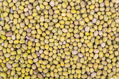 Green lentils Royalty Free Stock Photography
