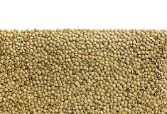 Green Lentils Background , isolated Stock Images