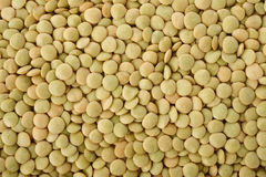 Green lentils background Stock Photography