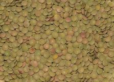 Green lentils in detail. Beautiful green lentils in detail Royalty Free Stock Photography