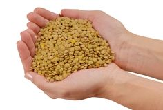 Green lentils, handful of raw rosefinch,  beans are in female ha Royalty Free Stock Photography