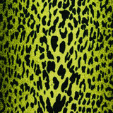 Green leopard, jaguar, lynx skin background Royalty Free Stock Photo