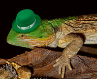 Green Leprechaun Lizard. Royalty Free Stock Images