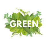 Green letter with leaves Stock Image