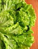 Green Lettuce Stock Images