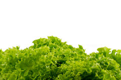 Free Green Lettuce Royalty Free Stock Image - 20320876
