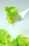 Green lettuce Royalty Free Stock Photo
