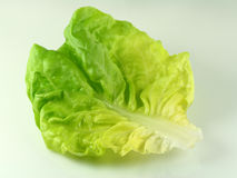 Green lettuce Stock Photos