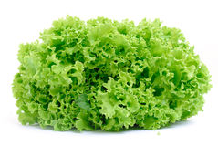Green Lettuce Royalty Free Stock Photos