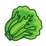 Green Lettuce cartoon isolated  illustration Stock Photo