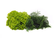 Green lettuce and dill Stock Photos