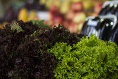 Green lettuce Stock Image