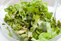 The green lettuce with herbs Stock Photo