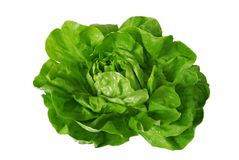 Green lettuce isolated over white Stock Photography