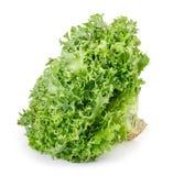 Green lettuce isolated on white. Fresh green frisee lettuce isolated on white background. Vegetable salad lettuce. Crispy endive royalty free stock photography