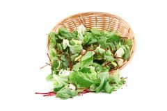 Green Lettuce Leaves in basket. Stock Image