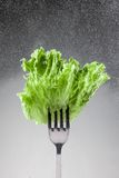 Green lettuce leaves on a fork Stock Photo
