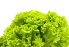 Green lettuce leaves Stock Image