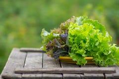 Green lettuce leaves. Lettuce leaves on wooden background. Royalty Free Stock Image