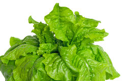Green lettuce leaves on a white background Stock Image