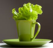 Green lettuce in a mug Stock Images