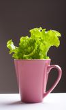 Green lettuce in a mug. Green lettuce in a pink  cup on a table Stock Photography