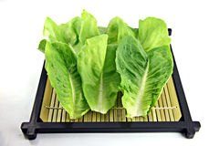 Green lettuce placed in the dish. Stock Photography
