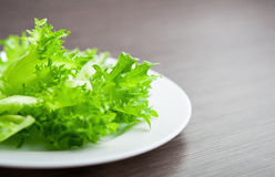 Green lettuce on a plate close-up macro. Stock Photography