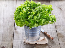 Green lettuce on rustic wooden background Stock Photography