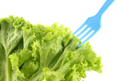 Green lettuce salad and blue fork Royalty Free Stock Photo