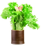 Green lettuce salad with a butterfly in brown cup Royalty Free Stock Photo