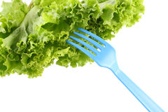 Green lettuce for salad and fork Stock Photos