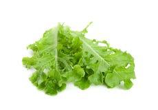 Green lettuce salad fresh leaf Stock Image