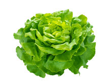 Green lettuce salad head Stock Photos
