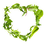 Green lettuce salad leafs. Royalty Free Stock Images