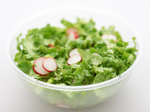 Green lettuce salad Royalty Free Stock Image