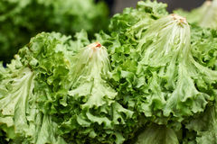 Green lettuce salad Stock Images