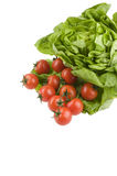 Green lettuce salad and tomato fresh food Stock Image