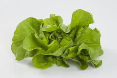 Green lettuce Royalty Free Stock Photography
