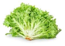 Green lettuce on white. Fresh green frisee lettuce on white background. Vegetable salad lettuce. Crispy endive stock photos