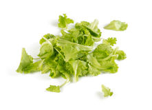 Green lettuce on white Royalty Free Stock Images