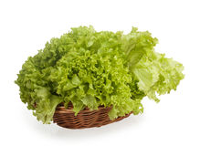 Green lettuce in a wicker basket Royalty Free Stock Photography